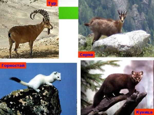 Животный мир КБР - география, презентации