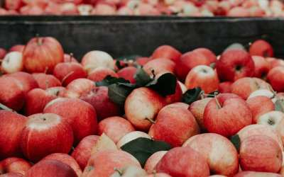 For Compac, Sorting a Bounty of Fresh Produce at Peak Quality Hinges on an Efficient Service Operation
