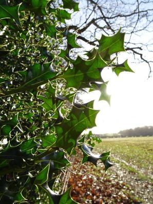 Holly light