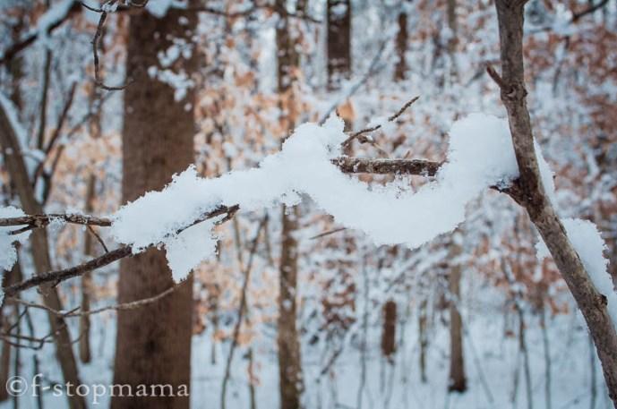 changing-seasons-december-036