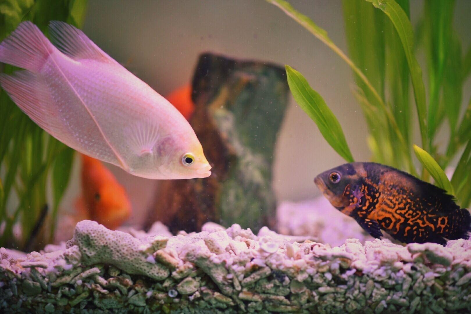 How Many Fish Will My Aquarium Hold