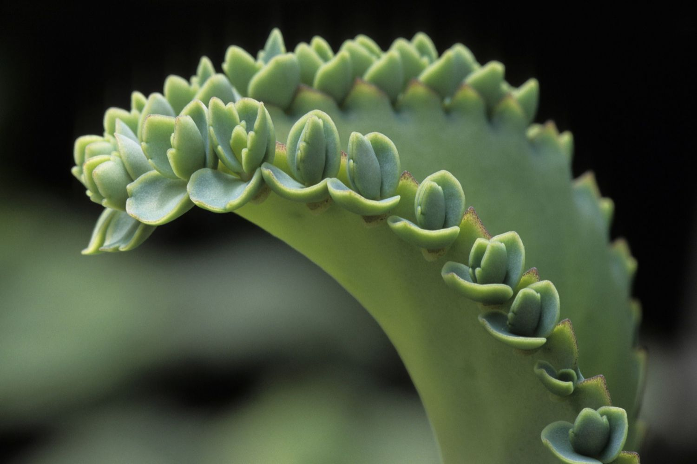 Types Of Vegetative Propagation