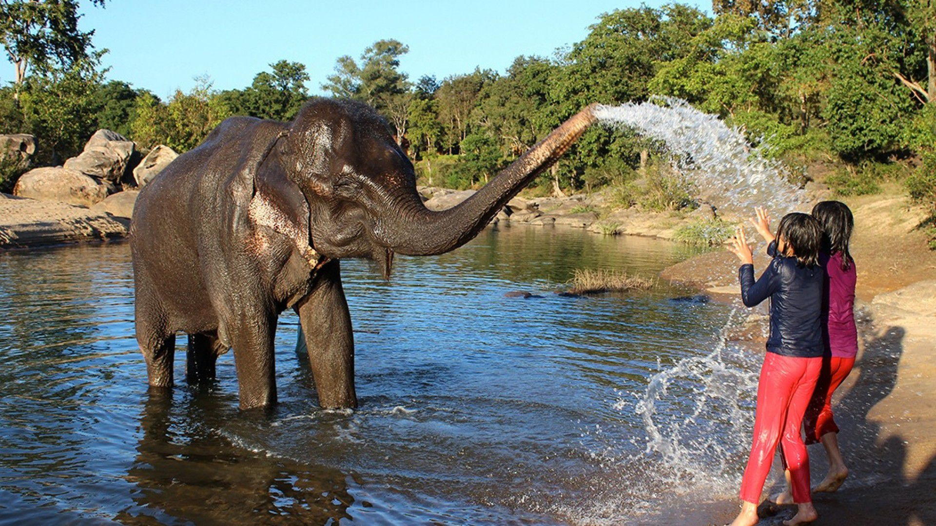 Where To See Elephants In India 4 Ethical Places