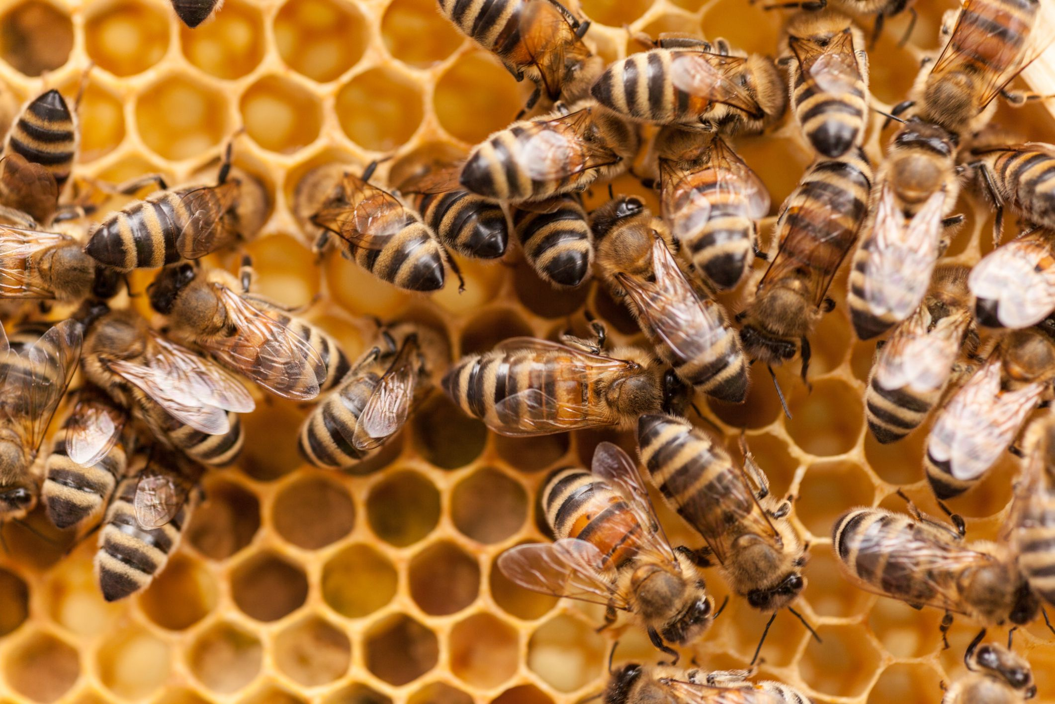 15 Fascinating Facts About Honey Bees