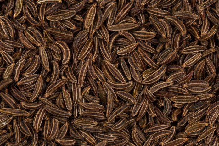 Image result for images of caraway seeds