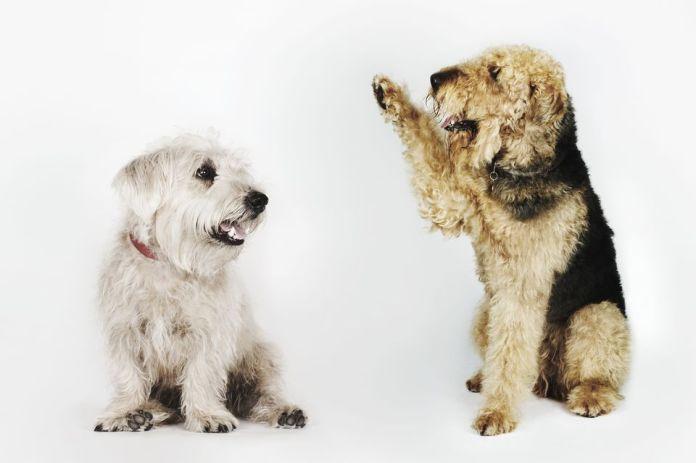 dog waving at another dog