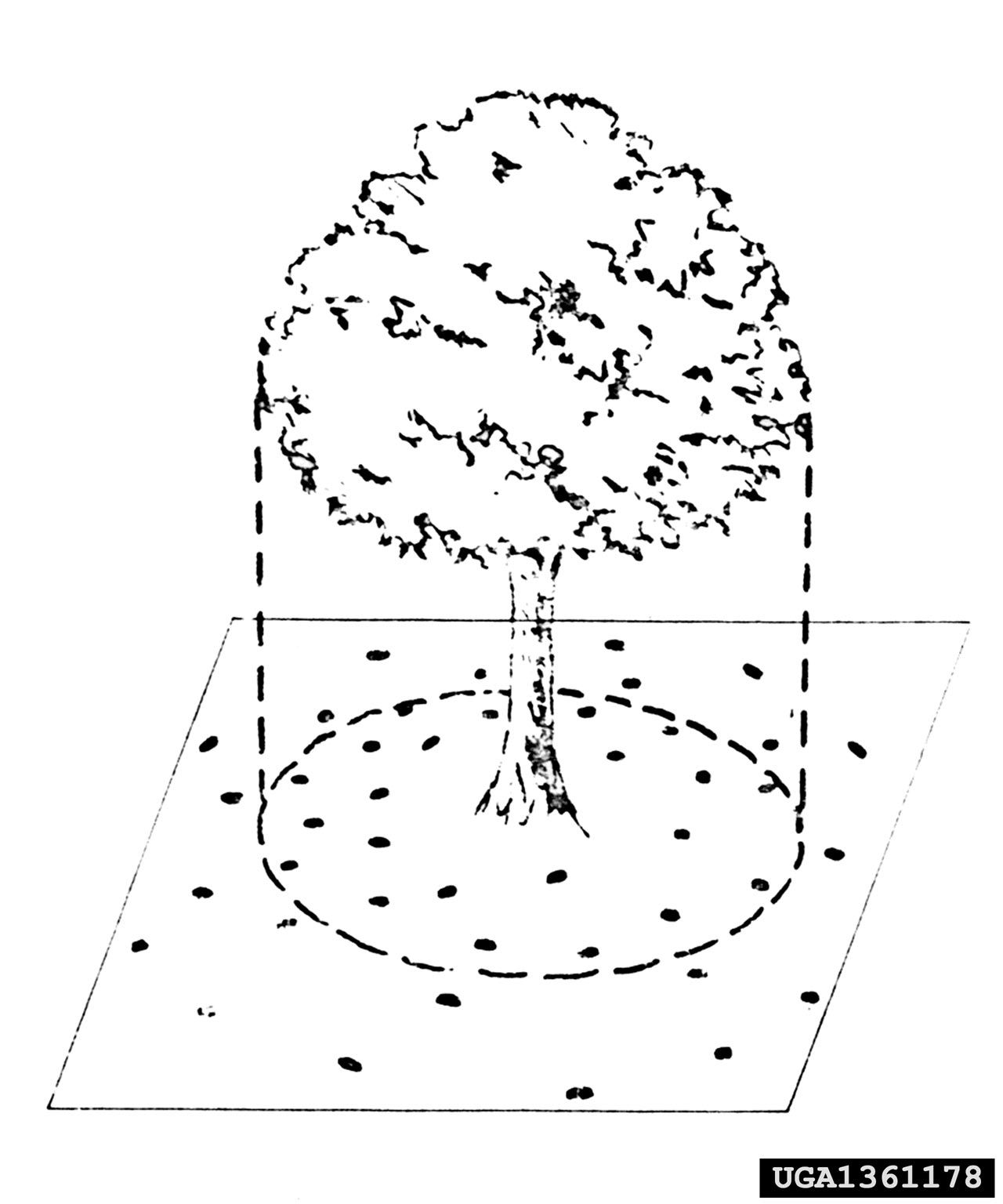 When And How Do I Fertilize Trees