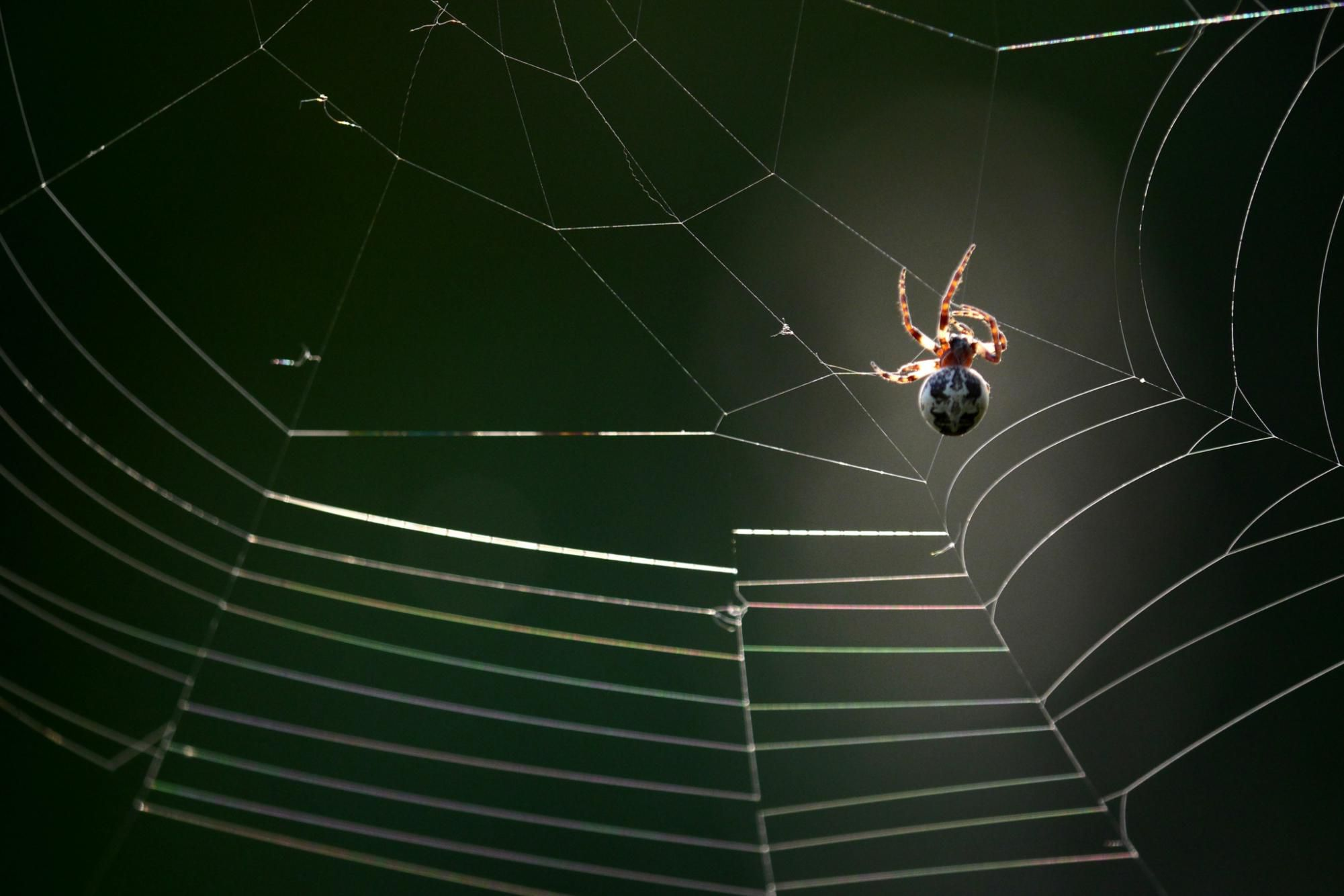 Why Spiders Build Webs And More Fun Facts