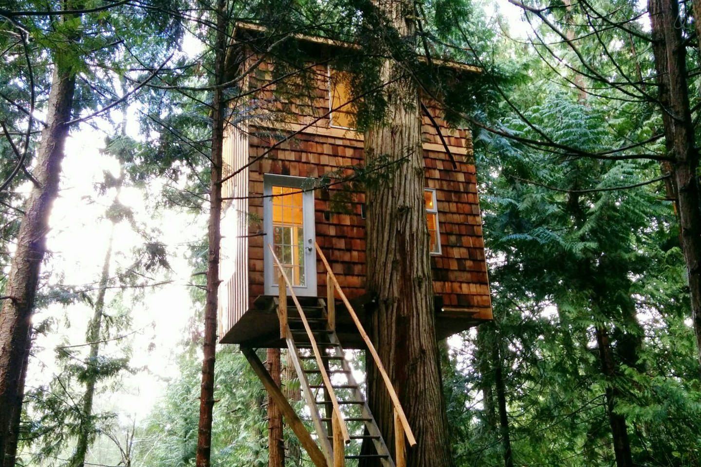 A Tree Top Retreat That Cost 8200
