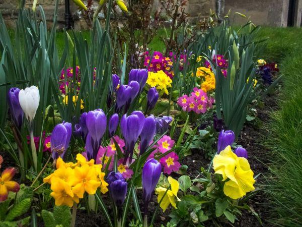 spring flower garden ideas 5 Tips for a Better Spring Flower Garden