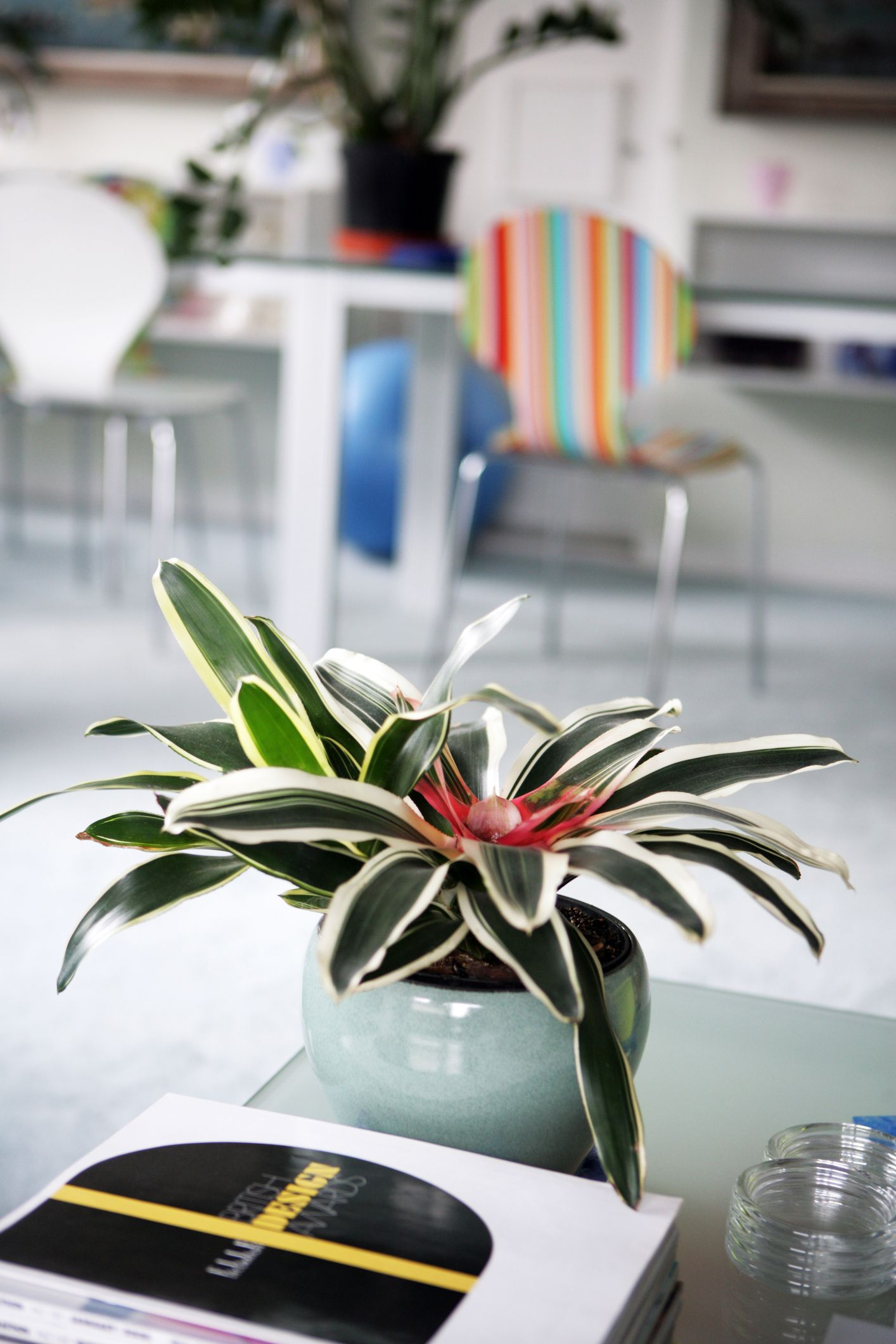 Best Interior House Plants