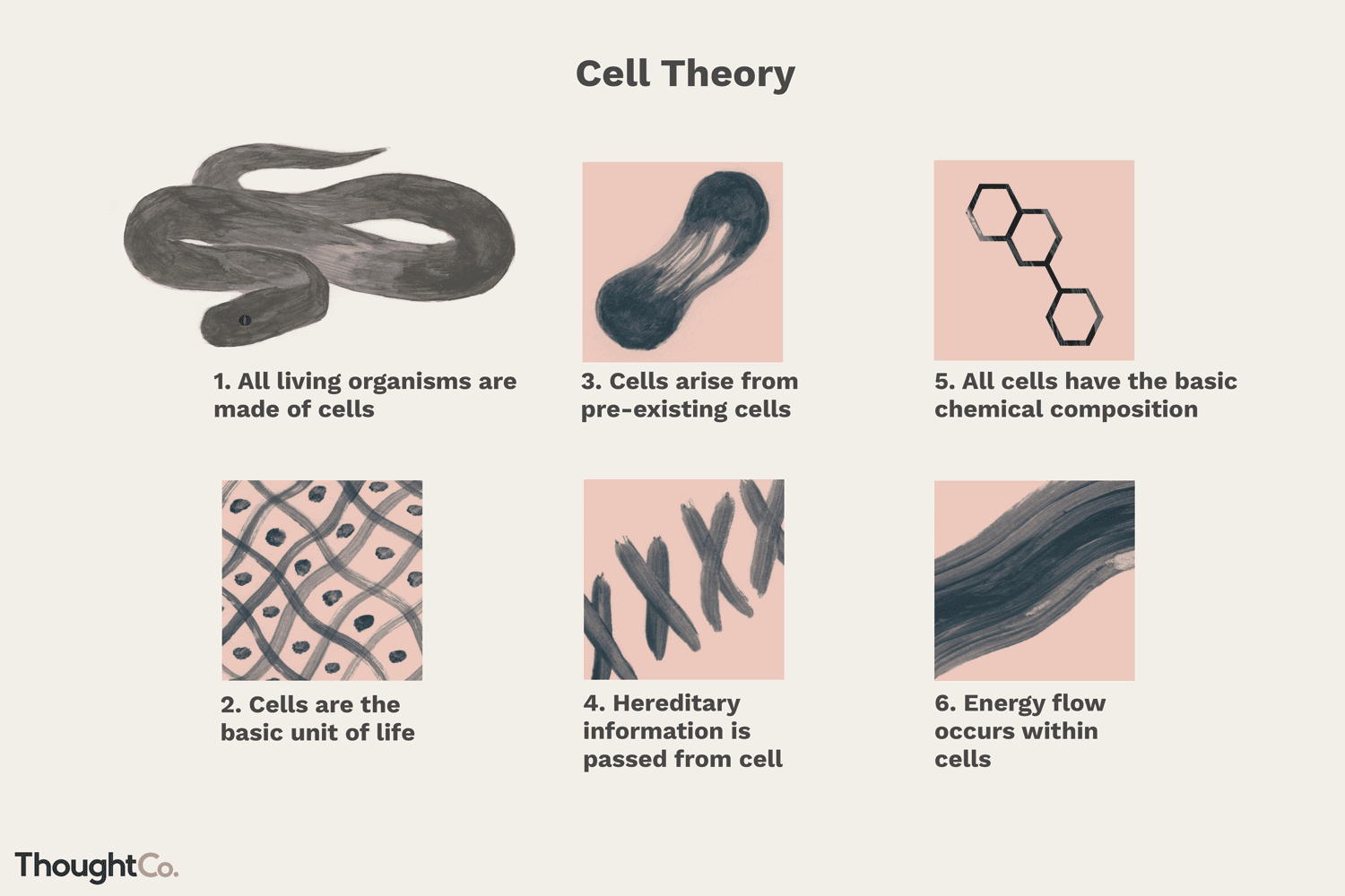 Cell Theory A Core Principle Of Biology