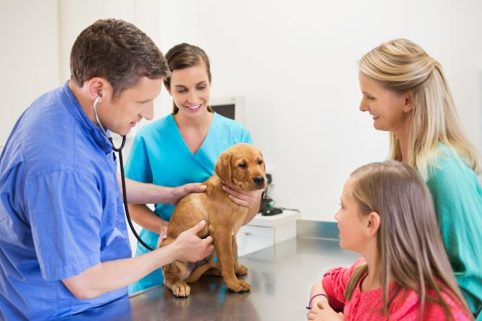 Image result for Vet For Your Animal