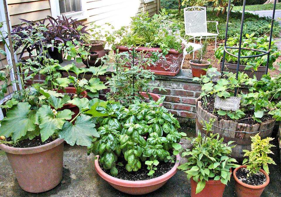 Container Gardening Celebrate Urban Birds