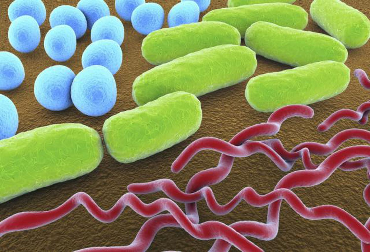 3 Common Bacteria Shapes