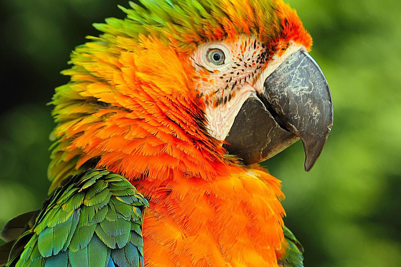Catalina Macaws As Pets Species Profile