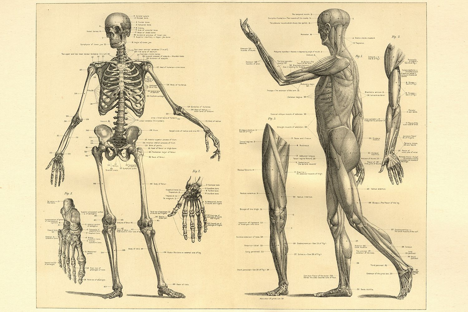 French Vocabulary Guide Parts Of The Body