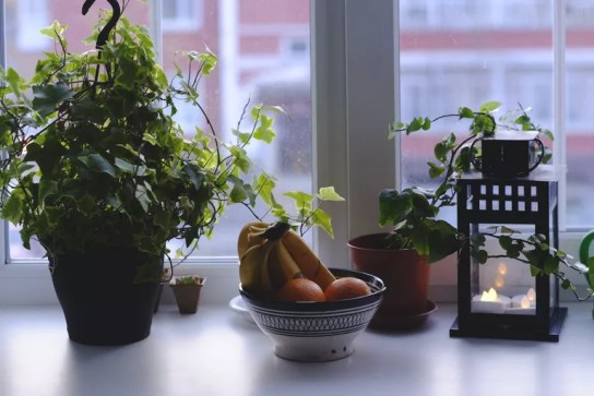 Bowl of fruit and potted plant on windowsill