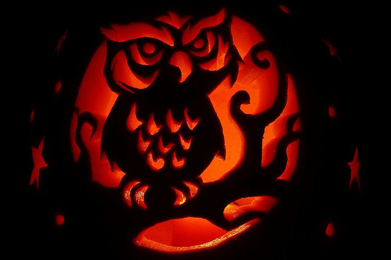 Bird Pumpkin Carving Stencils And Patterns