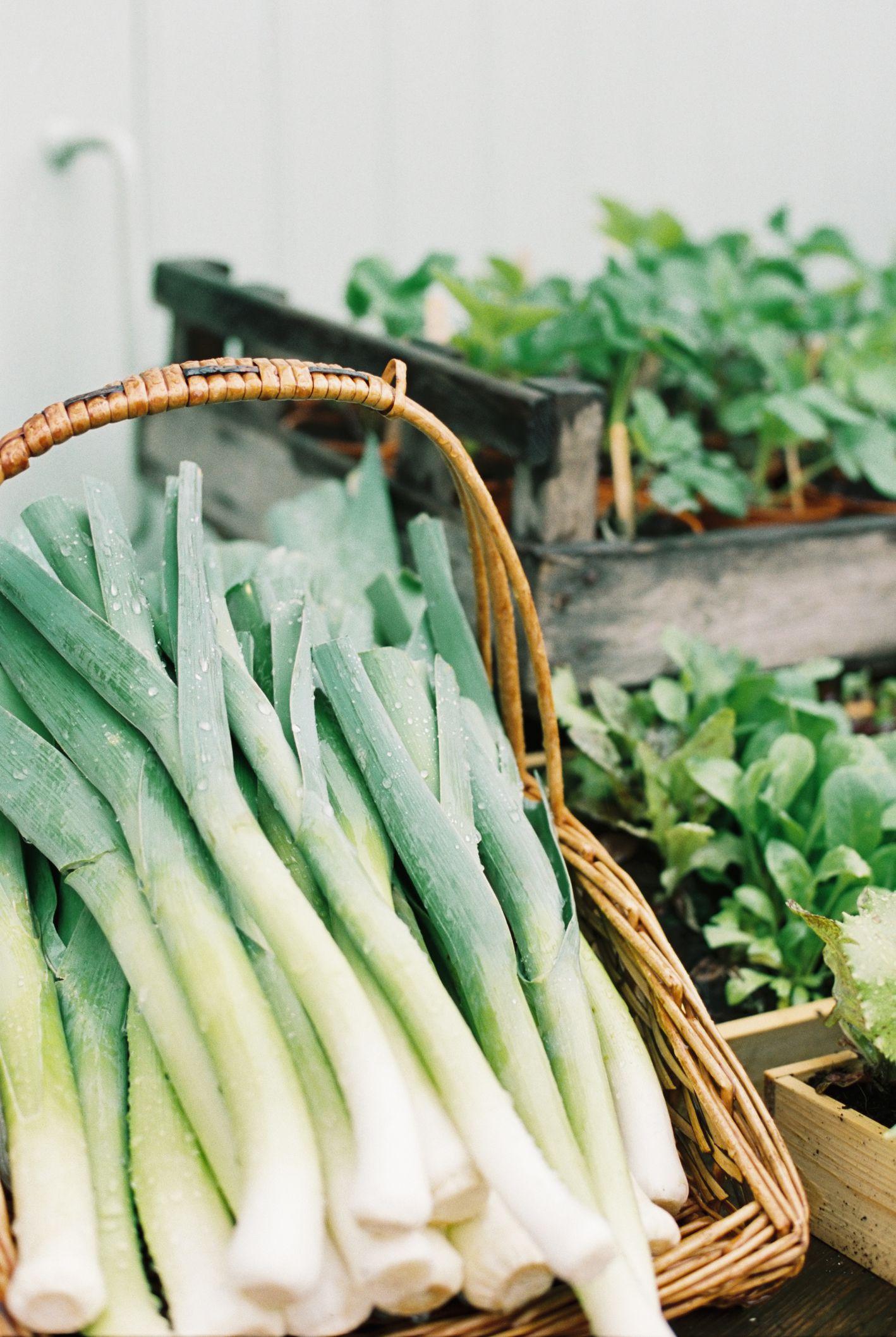 How To Grow Leeks In The Home Vegetable Garden