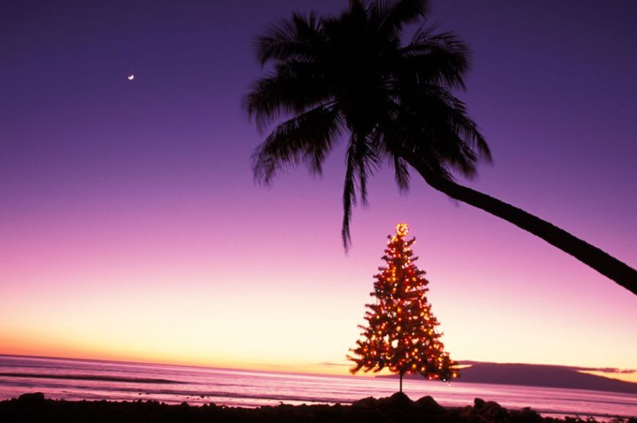 Christmas tree under a palm on the beach at sunset