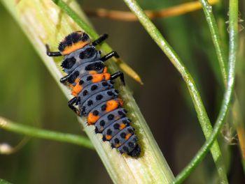 Good And Bad Ladybugs