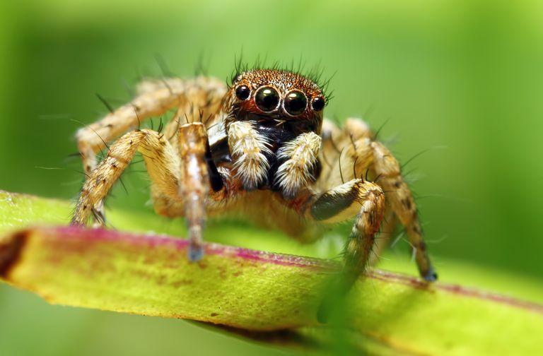 Örümcek atlıyor.