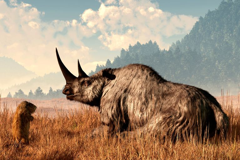 Coelodonta, aka the Woolly Rhino