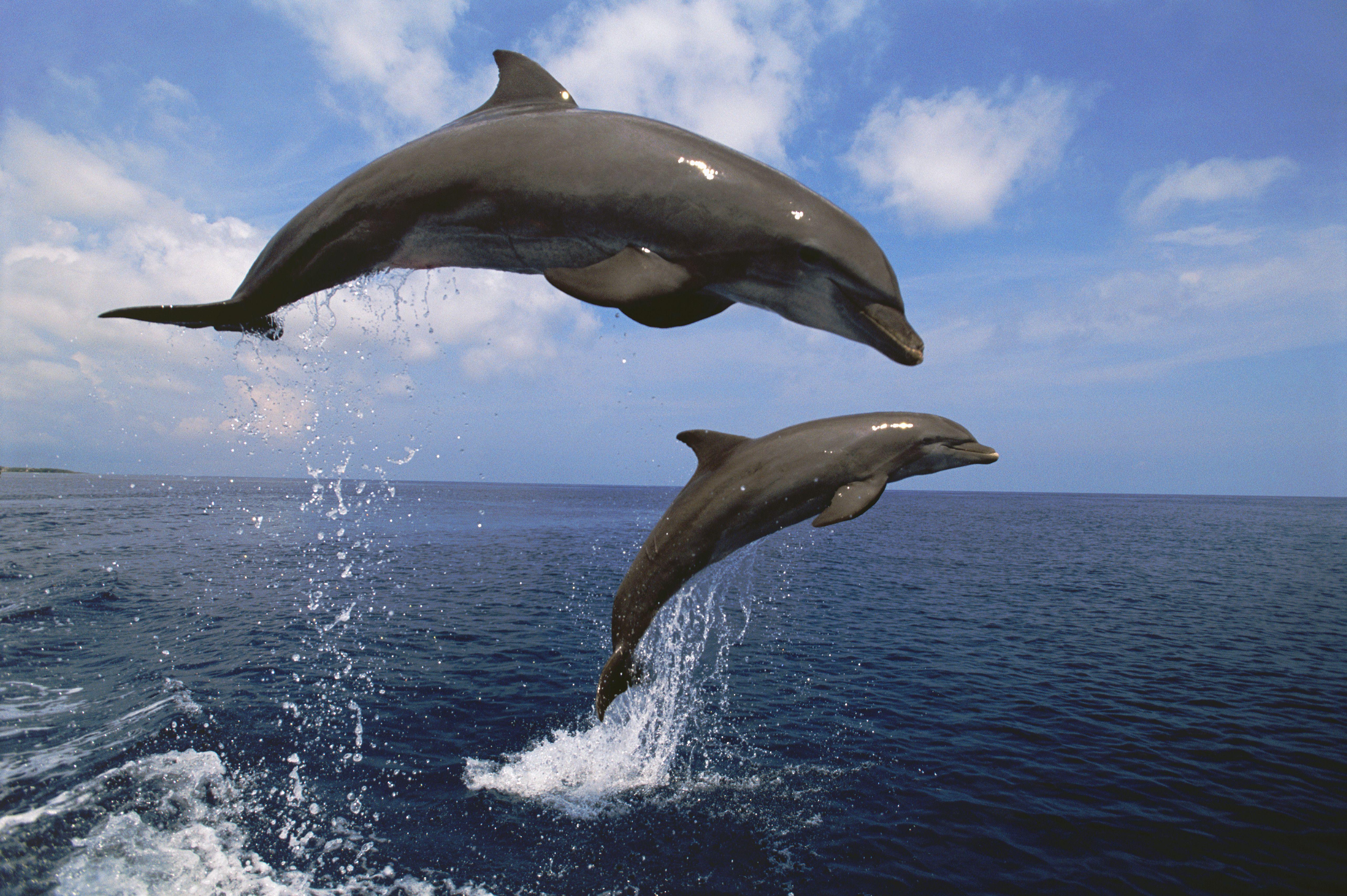 Bottlenose Dolphin Worksheet Kindergarten Bottlenose Best Free Printable Worksheets
