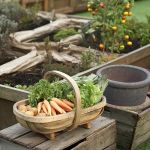 Ten Tips For Successful Raised Bed Gardening