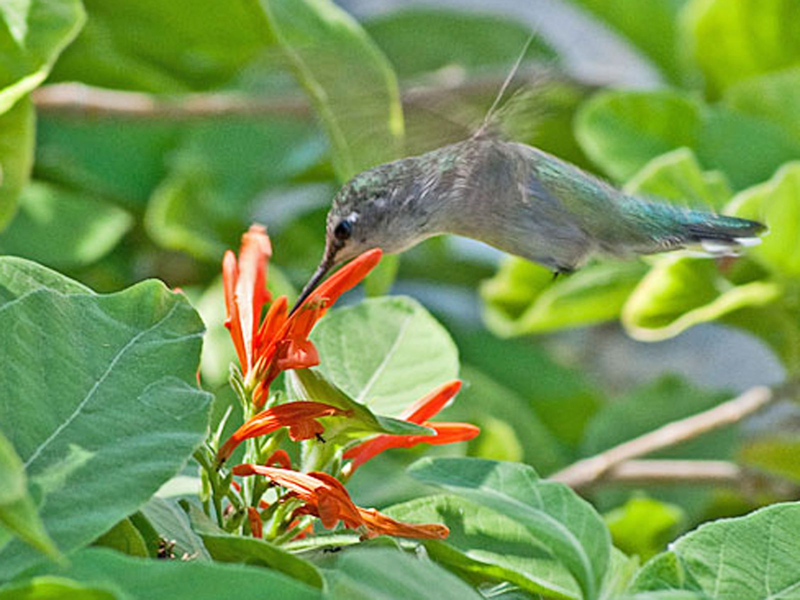 Best Plants To Attract Hummingbirds