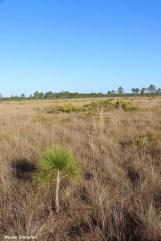Dry prairie00003