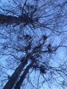 Sign of bears up a Tree
