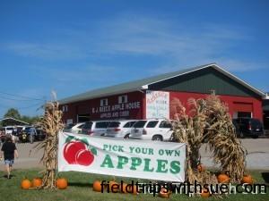 Apple-Picking-1061-300x225