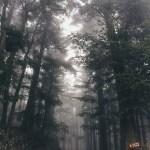 霧の中の六甲山を「iPhone 6」で撮影。