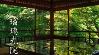 京都「瑠璃光院」春の特別拝観で青もみじの美しさを実感