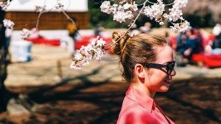 2017年 桜を求めて京都「二条城」へ