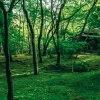 「iPhone 7 と7 Plus 」で綺麗に写真を撮るならRAW撮影がおすすめ。京都の新緑を撮ってみた