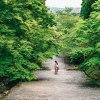 Photo journal | Vol.2 -京都 新緑-  #α6300 #iPhone7Plus