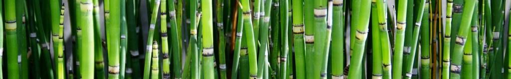 Zierpflanzen - Bambus