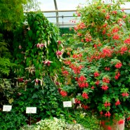 The Fuchsia Nursery of Rosi Friedl was founded in 1988,