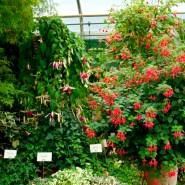 Die Fuchsien-Gärtnerei von Rosi Friedl wurde 1988 gegründet