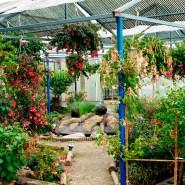 Die Fuchsien-Gärtnerei Guttmann bei Wien ist unbedingt eine Reise wert.