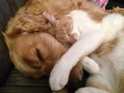 cat-and-dog-775116_1920