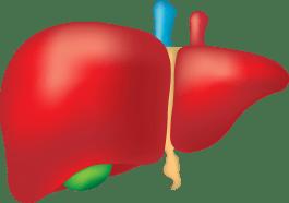 為什麼癌症病人需要提升肝臟功能?