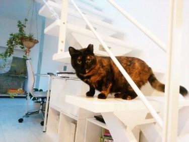 新築だからこそ!新しい家を猫の傷から守る対策とは?