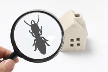 窓からの虫の侵入を防ぐには?虫対策のテクニックをご紹介!
