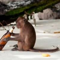 Condenaron a un mono a cadena perpetua