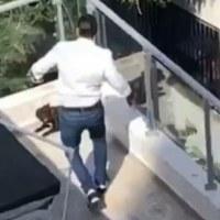 VIDEO | Procuraduría busca hombre captado en cámara mientras patea a un perro