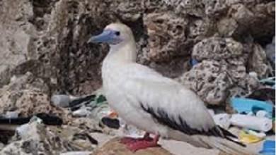 Mueren un millón de aves cada año